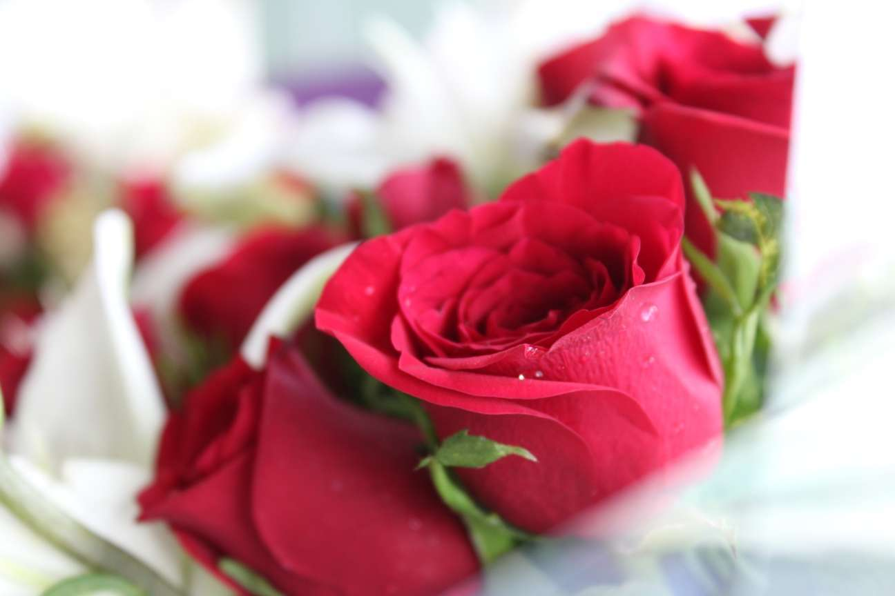 7 Most Romantic Flowers Meant To Express Your Love
